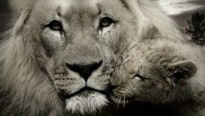 Caring Beast